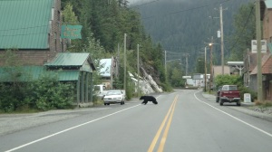 Bear Sighting in Hyder, AK